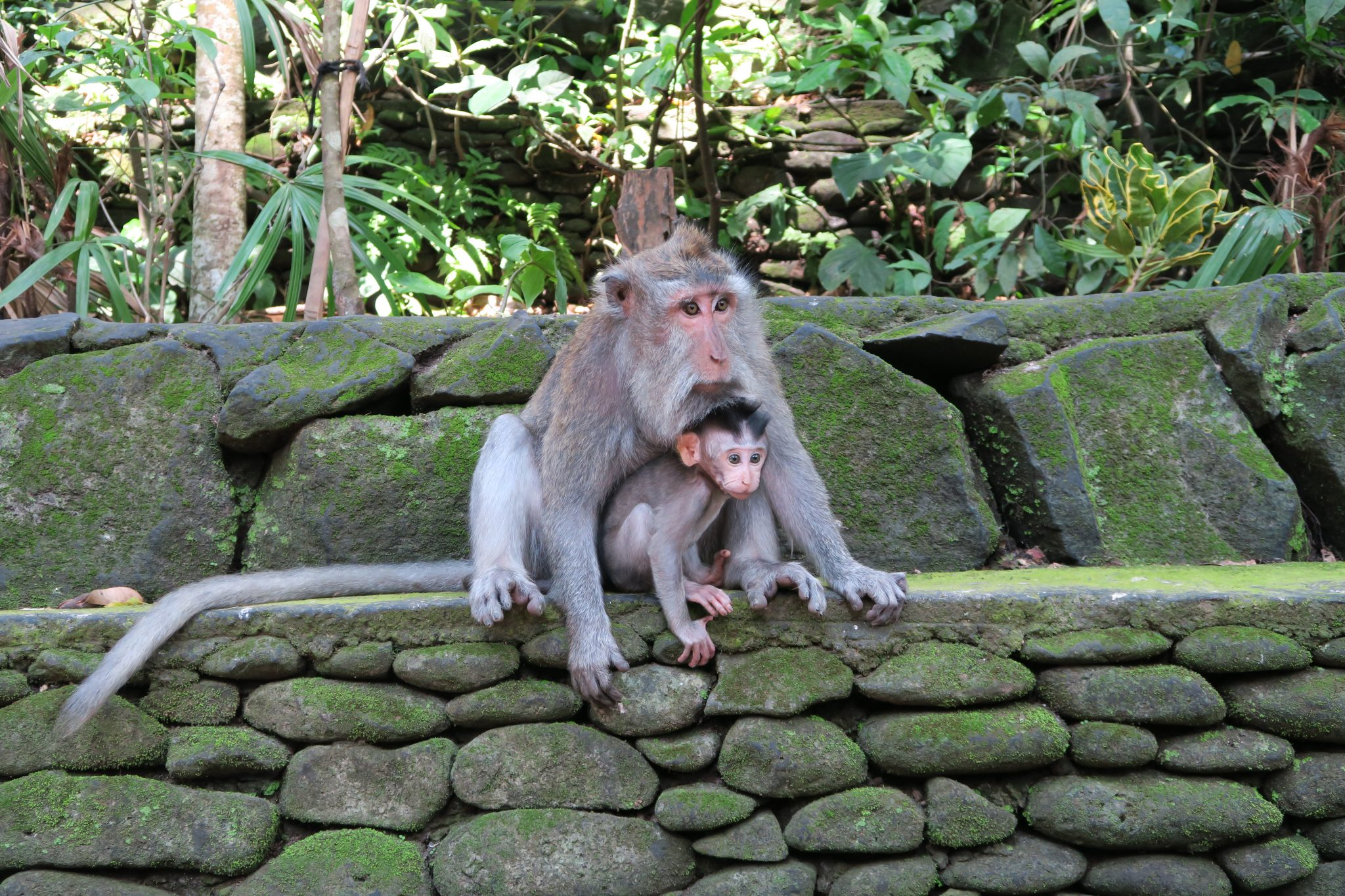 Apen Ubud, monkey forest